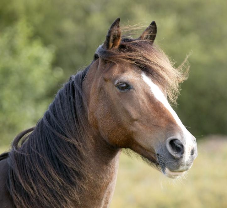 examples/Horse/Horse.jpg